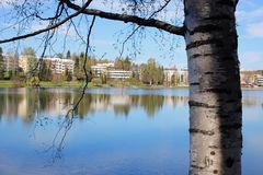 Birch Tree in Front of a Calm Lake in Finland during Springtime. A closeup of Finnish nature during the spring. Beautiful tree and its branches photographed in royalty free stock photo