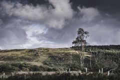Birch tree growing on the bottom of hill.Scenic landscape of Lake District,Cumbria,Uk. Birch tree with branches bended by wind growing on  the bottom of  hill stock photo