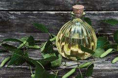 Birch tree juice. Birch tree essential oil. Alternative medicine. Naturopathy royalty free stock images
