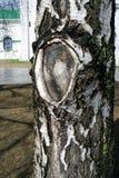 A birch tree. Kremlin in Nizhny Novgorod, Russia. Royalty Free Stock Image
