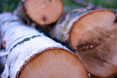 Birch tree log Royalty Free Stock Photos