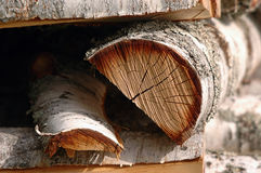 Birch Tree Logs Stock Photography