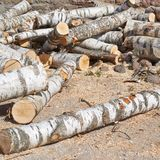 Birch tree logs Royalty Free Stock Photography