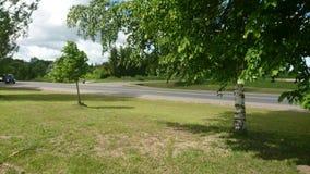 Birch tree near road Stock Image