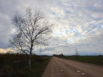 Birch tree, rad and cloudy sky Royalty Free Stock Image