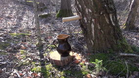 Birch tree sap dripping in jug through wooden peg. Birch tree sap dripping in a brown clay jug through wooden peg spigot stock video