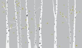 Birch Tree Silhouette Background Royalty Free Stock Photos
