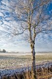 Birch tree in snowy landscape Royalty Free Stock Photos