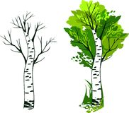 Birch Stock Images