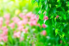 Birch tree and tulip flowers Stock Photos