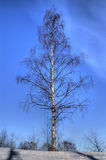 Birch tree in winter. Scenic view of birch tree in winter with blue sky background, HDR image Royalty Free Stock Photos