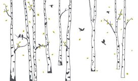 Free Birch Tree With Green Falling Leaves And Birds Silhouette Royalty Free Stock Photography - 112941077