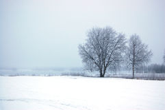 Birch trees. By frozen lake Stock Photos