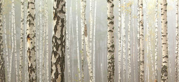 Birch trees in autumn forest in cloudy weather,  fall panorama Royalty Free Stock Images