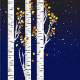 Birch trees in the autumn over a starry night Stock Photo