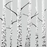 Birch trees. Background. Vector illustration vector illustration