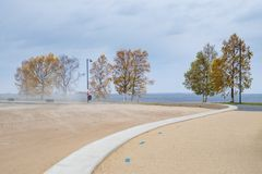 Birch trees and blowing sand on a windy autumn day stock photos
