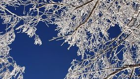 Birch trees branches rolling round against deep blue sky stock footage