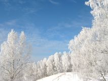 The Frozen Beauty: White Birch Trees and the Sky Stock Photos