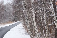 Birch trees lean towards walk way on a grey day in February. Snow covered trees and stock photo
