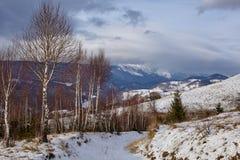 Birch trees on mountain Stock Photography