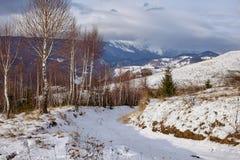 Birch trees on mountain Royalty Free Stock Photo