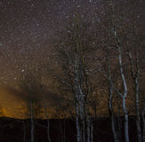 Birch Trees and the Night Sky Royalty Free Stock Images