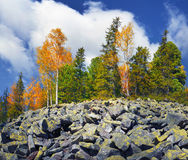 Birch trees on the rocks Stock Photos
