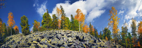 Birch trees on the rocks Stock Images