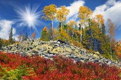Birch trees on the rocks Stock Photos