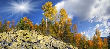 Birch trees on the rocks Royalty Free Stock Image