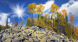 Birch trees on the rocks Stock Photo