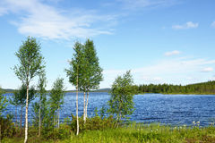 Birch trees on the shore of the blue lake Royalty Free Stock Photos
