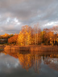 Birch trees and their reflections on sunrise. View Royalty Free Stock Images
