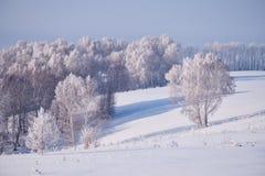 Birch trees under hoarfrost in snow field in winter season Royalty Free Stock Photography