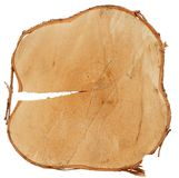 Birch trunk cross cut wood texture Royalty Free Stock Photography