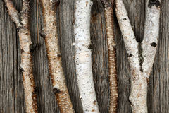 Birch trunks. Birch tree trunks and branches on natural wood background royalty free stock image