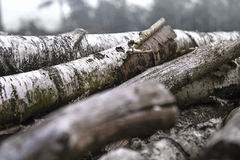 Birch trunks. A moody picture of some birch trunks lying in a cold foggy forest. Beautiful colors and atmosphere Stock Photography
