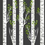 Birch trunks in night. Illustration of Birch trunks in night Royalty Free Stock Images