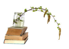 Birch twig with flowering catkins in a glass jar on a pile of ol. D books, blossoming branch of catkins willows close up in early spring, isolated elements on Stock Photo