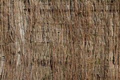 Birch twig texture Royalty Free Stock Images
