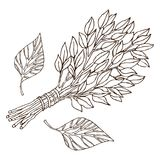 Birch whisks for the sauna, for Russian bath for body hygiene. Set of accessories for bath, sauna. Hand drawing in. Sketch style. Isolated object on white stock illustration