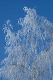 Birch in winter stock photo