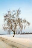 Birch (winter) Royalty Free Stock Photo