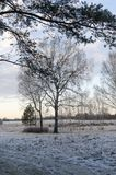 Birch at winter. Royalty Free Stock Photos