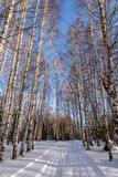 Birch winter forest snow road Royalty Free Stock Image