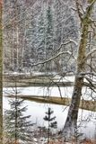 Birch Winter Landscape Outdoors Nature Beautiful Stock Photo