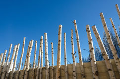 Birch winter wall. Blue sky birch winter wall fence Royalty Free Stock Image