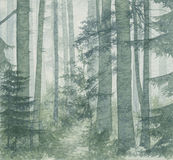 Birch wood. A birch wood. Hand drawn picture. Made by watercolor Stock Images