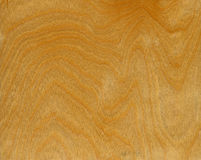 Birch wood background Stock Image